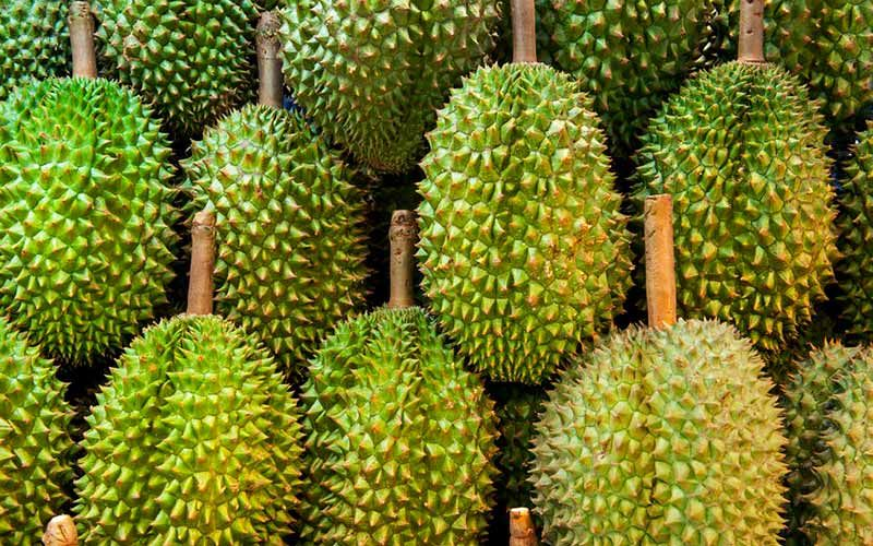 Durian drives southern economy with new Chinese 700 million baht factory