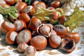 Georgian Hazelnuts future and its global market share