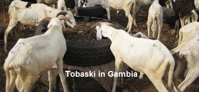Tobaski Gambia and savings