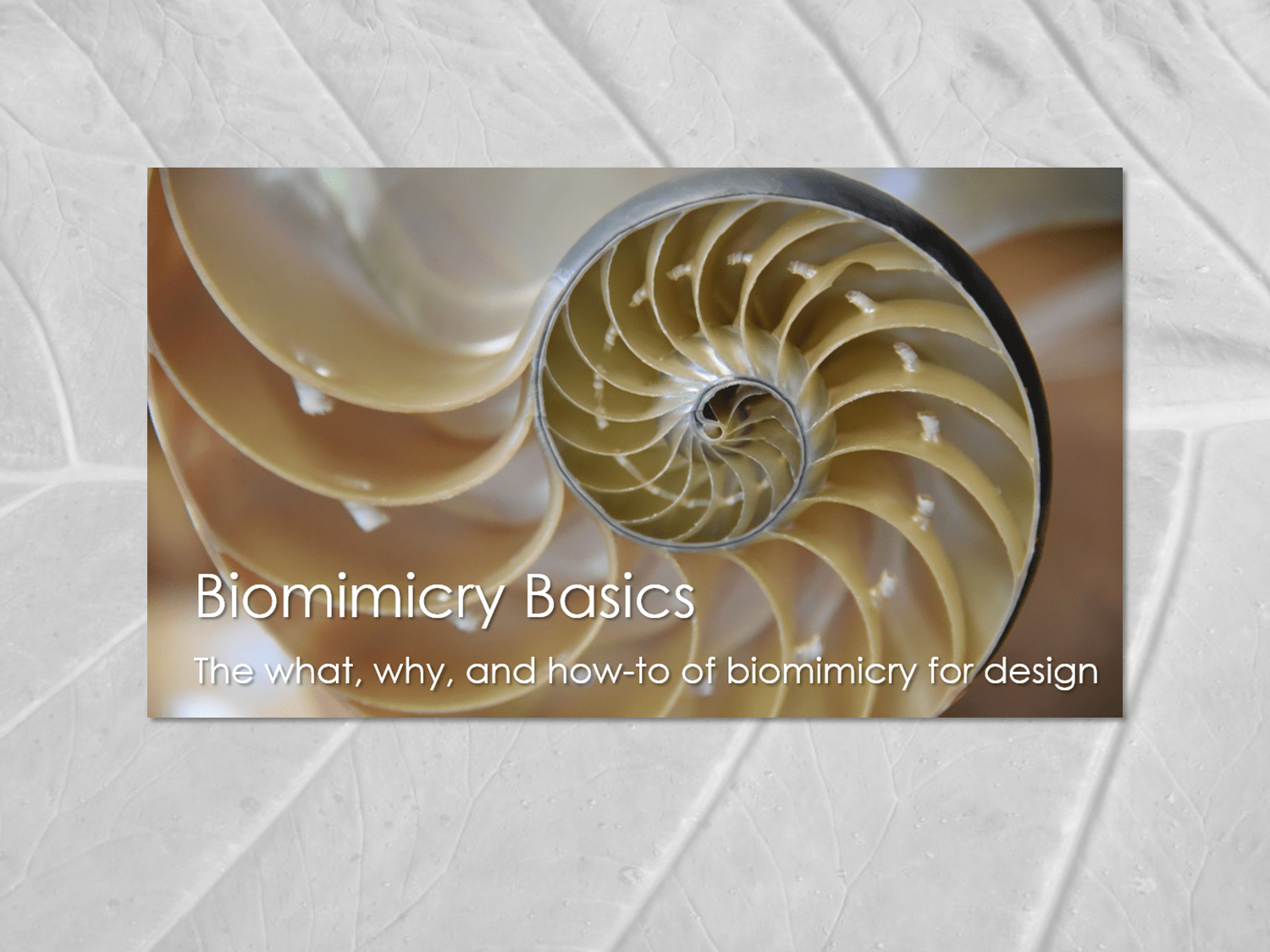 Biomimicry Examples Design