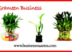 chinese bamboo tree, good luck bamboo, bamboo nursery, bamboo plants, lucky bamboo,