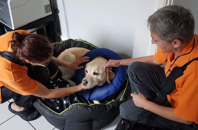 Pembrokeshire Pets Benefit From an Expanding All Pets Vet Care