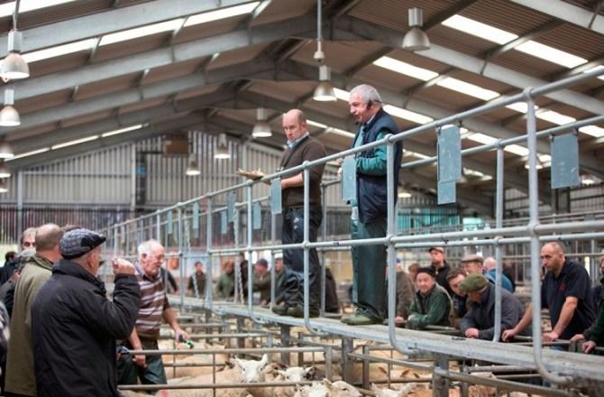 County Marks Success of Regional Livestock Centre