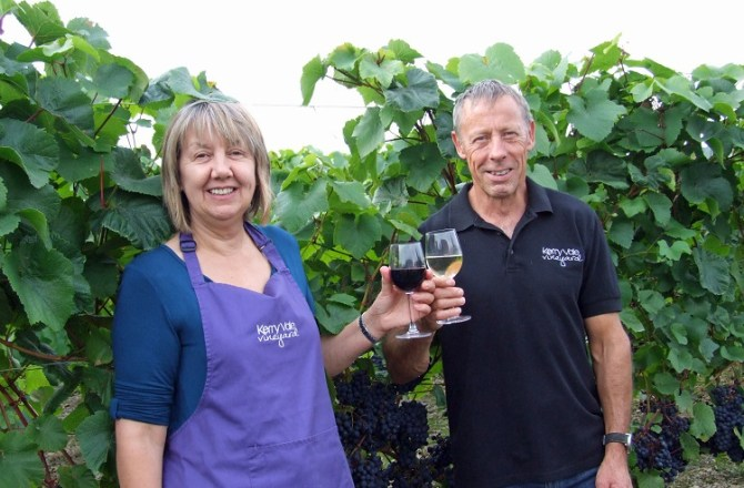 Welsh Vineyard Set for a Bumper Vintage