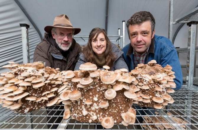 North Wales Mushroom Company Set for Rapid Expansion