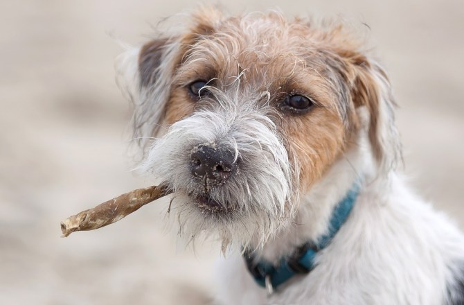 West Wales' Dog-Friendly Holiday Hotspots Revealed