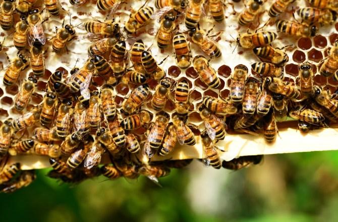 Councils' Green Infrastructure Pollinators Plan Wins National Landscape Award