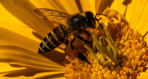 Project Targets Awareness of Pollinators in Monmouthshire