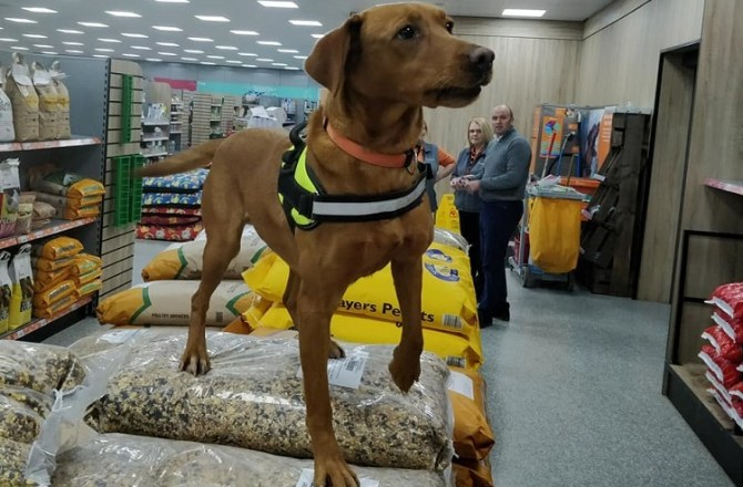 North Wales Pet Store Partners with Global Dog Detection Firm
