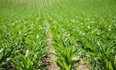 How to Insure Your Agricultural Projects in Nigeria