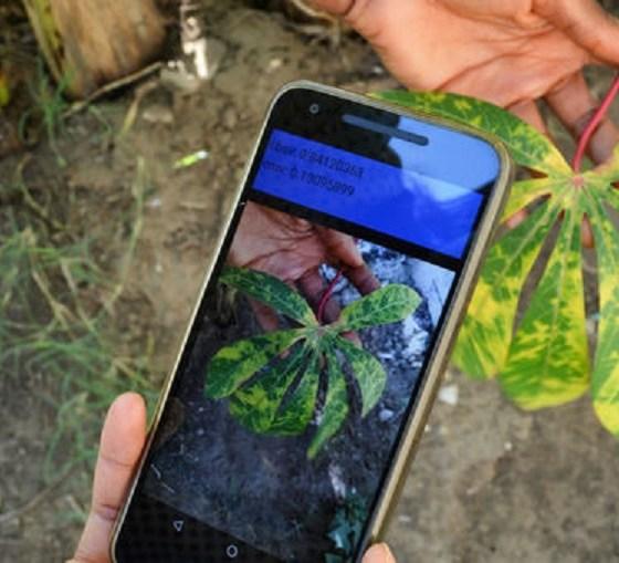 Researchers Develop App to Alert Farmers of Crop Diseases