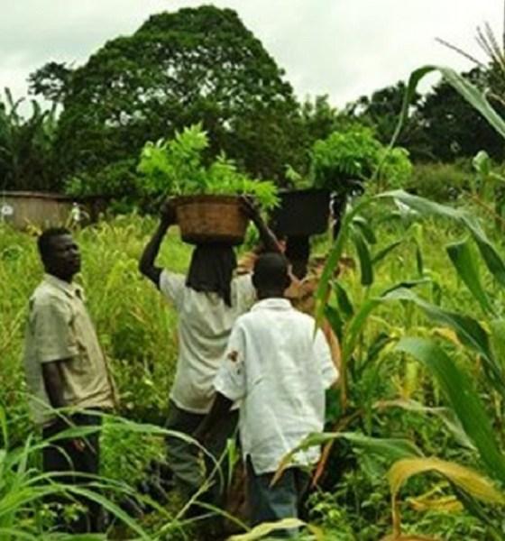 Ghana peasant farmers