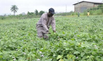 High-Yielding Crop Varieties