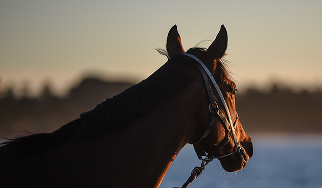 Off The Track equine business grant recipients announced | Racing Victoria