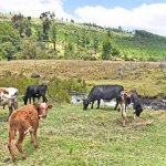 President Kenyatta Cancels Kimwarer Dam Project, Retains Arror