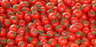 Association Lauds Inclusion Of Tomato Farmers In Anchor Borrowers Scheme