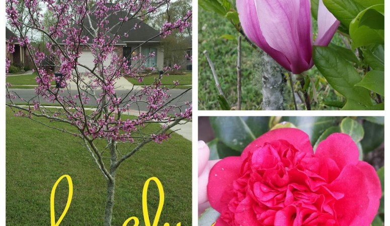 Oldies But Goodies: Spring