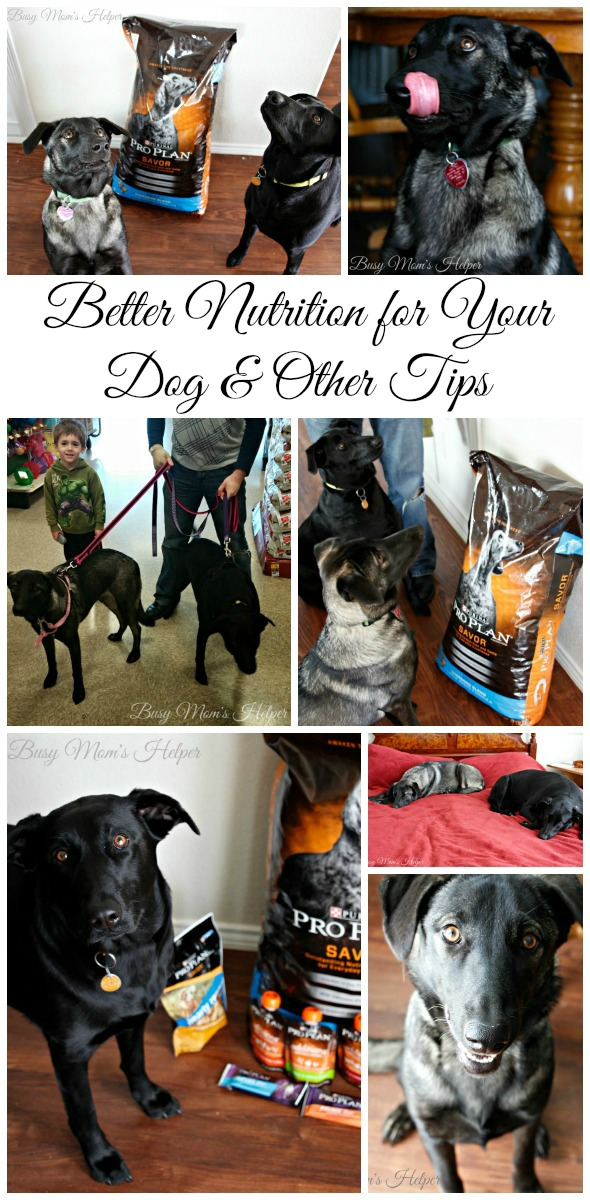Better Nutrition For Your Dog & Other Tips / by Busy Mom's Helper #ProPlanPet #ad