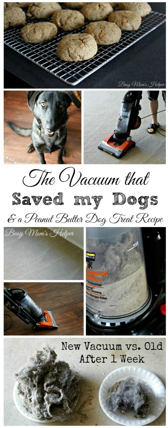 Peanut Butter Dog Treat Recipe / by Busy Mom's Helper / The Vacuum That Saved my Dogs #CleaningUntangled #ad #EurekaPower