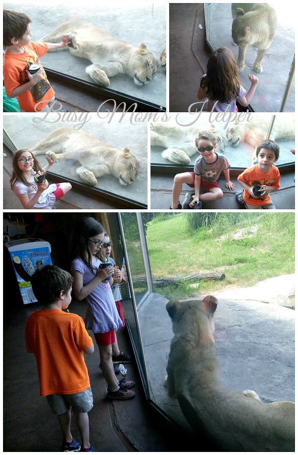Dallas Zoo / Texas / Travel / by Busy Mom's Helper #BBBestSummerEver #ad