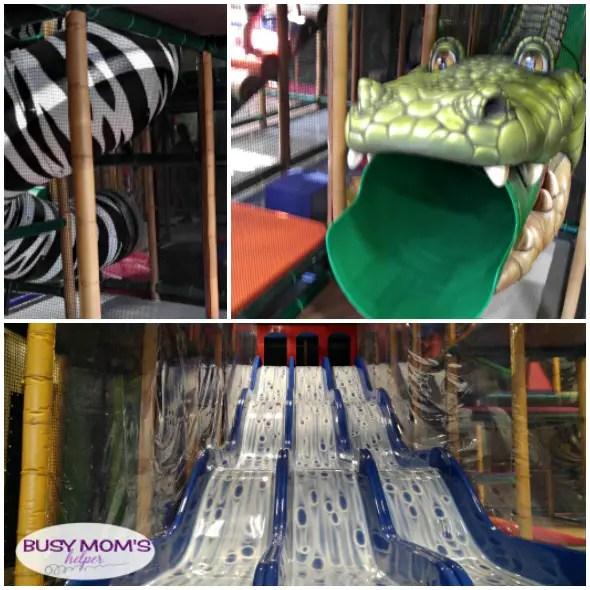 Safari Run Plano >> Fun Things To Do In Dallas Safari Run Busy Moms Helper
