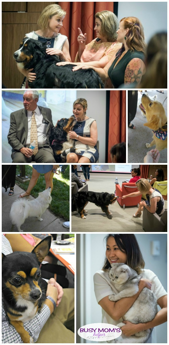 Lots of employees bring their pets to work with them at Purina, especially on Pets at Work Day #MeetPurina #ad