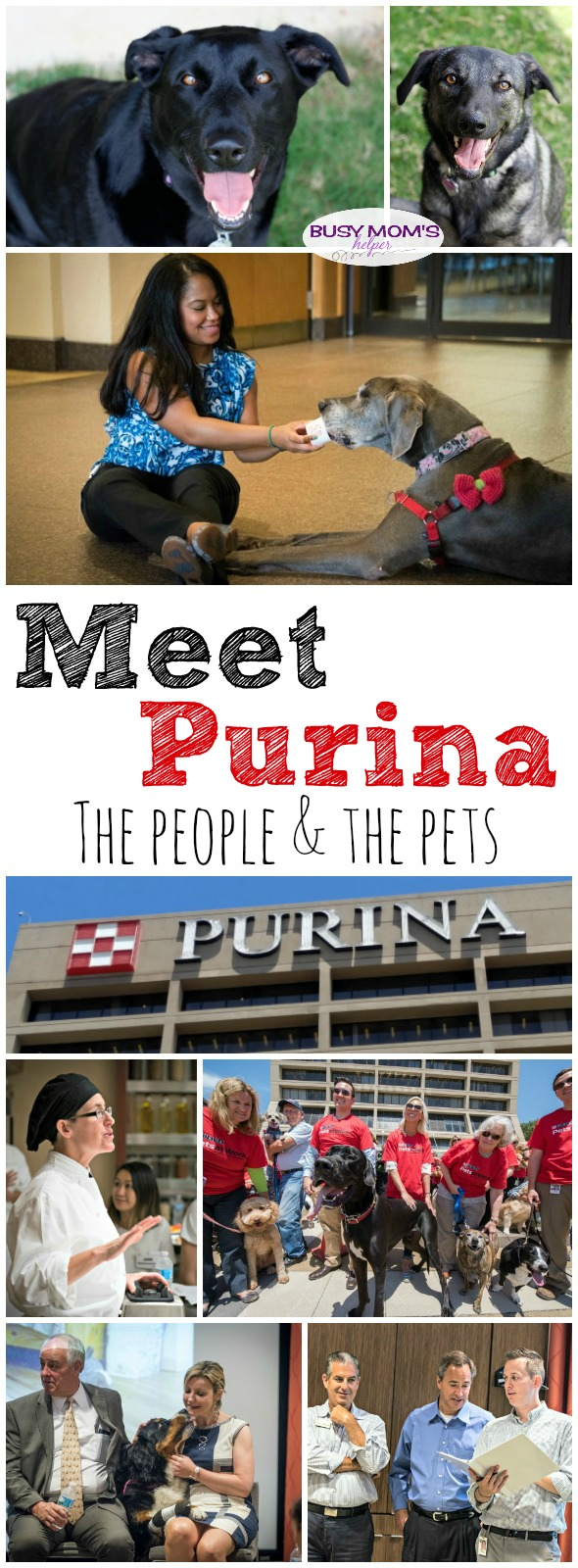 Meet the people behind Purina #MeetPurina #ad