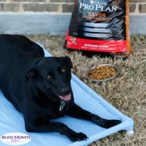 DIY PVC Dog Bed - Your pets will love this DIY PVC Dog Hammock Tutorial! #TheDogumentaries #ad