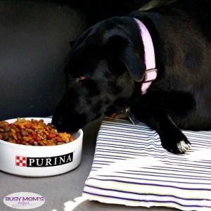 No Sew Dog Travel Cushion #FeedDogsPurina #ad @target