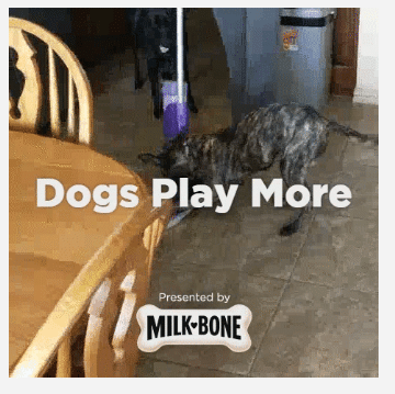 Dogs are More #AD #DogsAreMore #IC