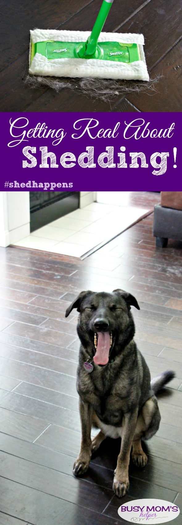 Getting Real About Shedding because #shedhappens #ad #swifferfanatic #pets #cleaning #pethair #dogs #puppies #animals