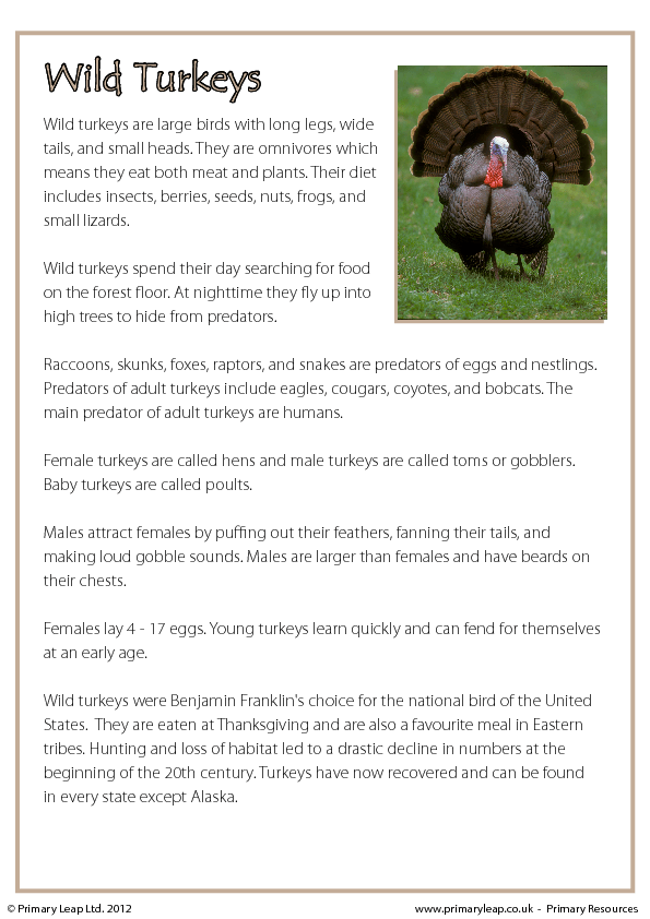 Thanksgiving Reading Comprehension Wild Turkeys Non