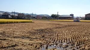 今度は、少し離れたところの田も。