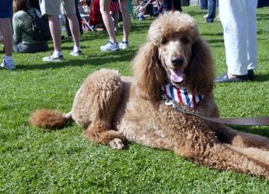 Milo, enjoying Memorial Day