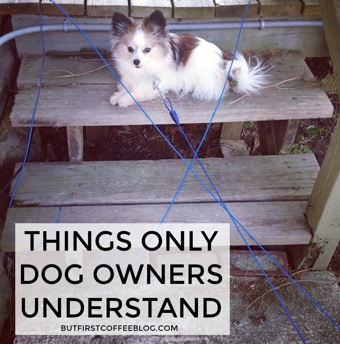 dog-owners