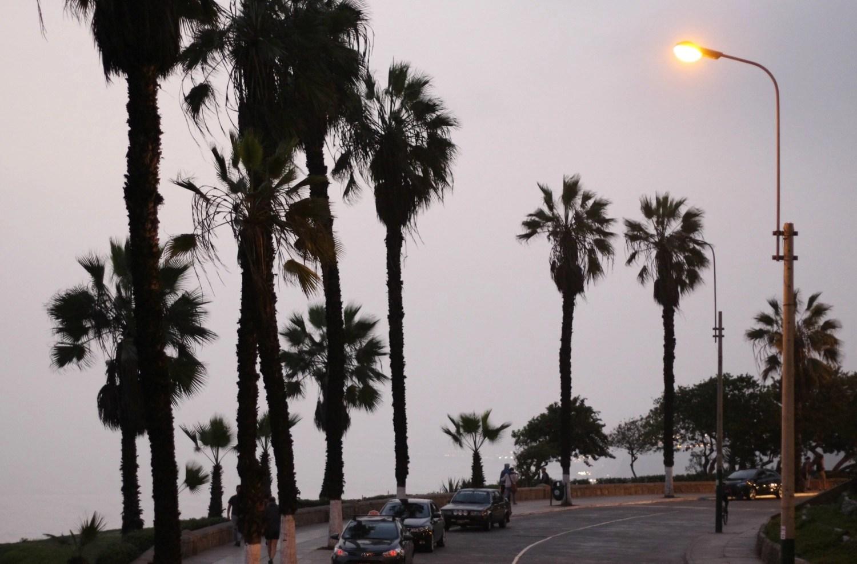 palm-trees-lima
