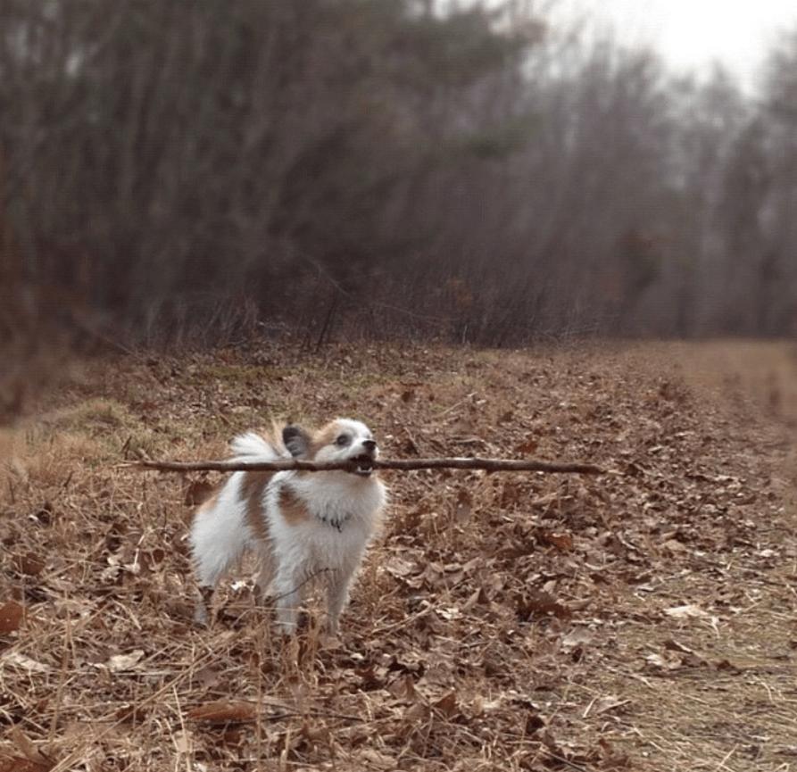 dog-lessons-3