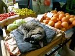 ::cat in fruit::