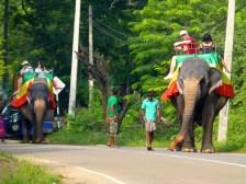 ::elephant traffic::