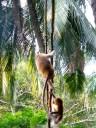 ::monkeys::