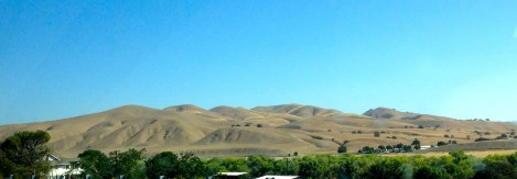 ::the hills in wine country look like they're blanketed::