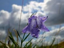 ::blue bell::