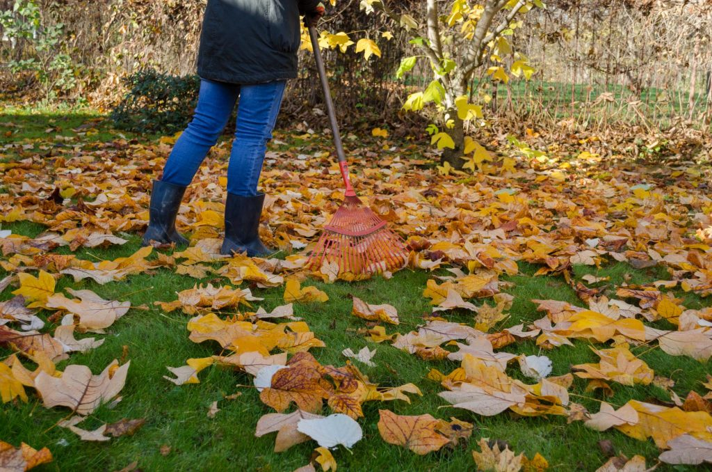 Butler County Landscaping - Fall Cleanup 1
