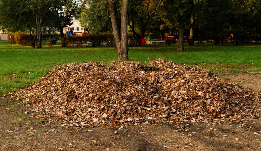 Butler County Landscaping - Fall Cleanup 2