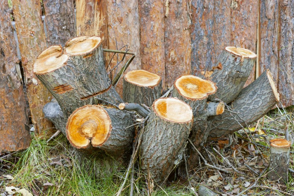 Butler County Landscaping - Stump Grinding 1