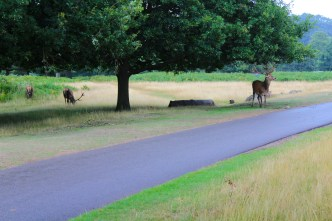 I was actually standing across these deer. I was thinking they would charge at me.