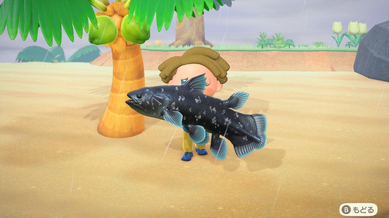 【あつ森】魚の収納場所に困ってるんだが…?【あつまれ どうぶつの森】
