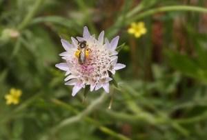 Garden bugs 238 238