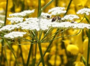 Garden bugs 239 38