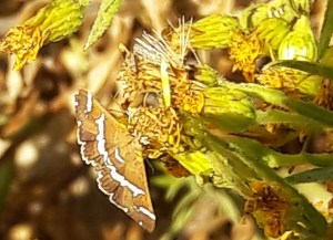 Garden bugs 25